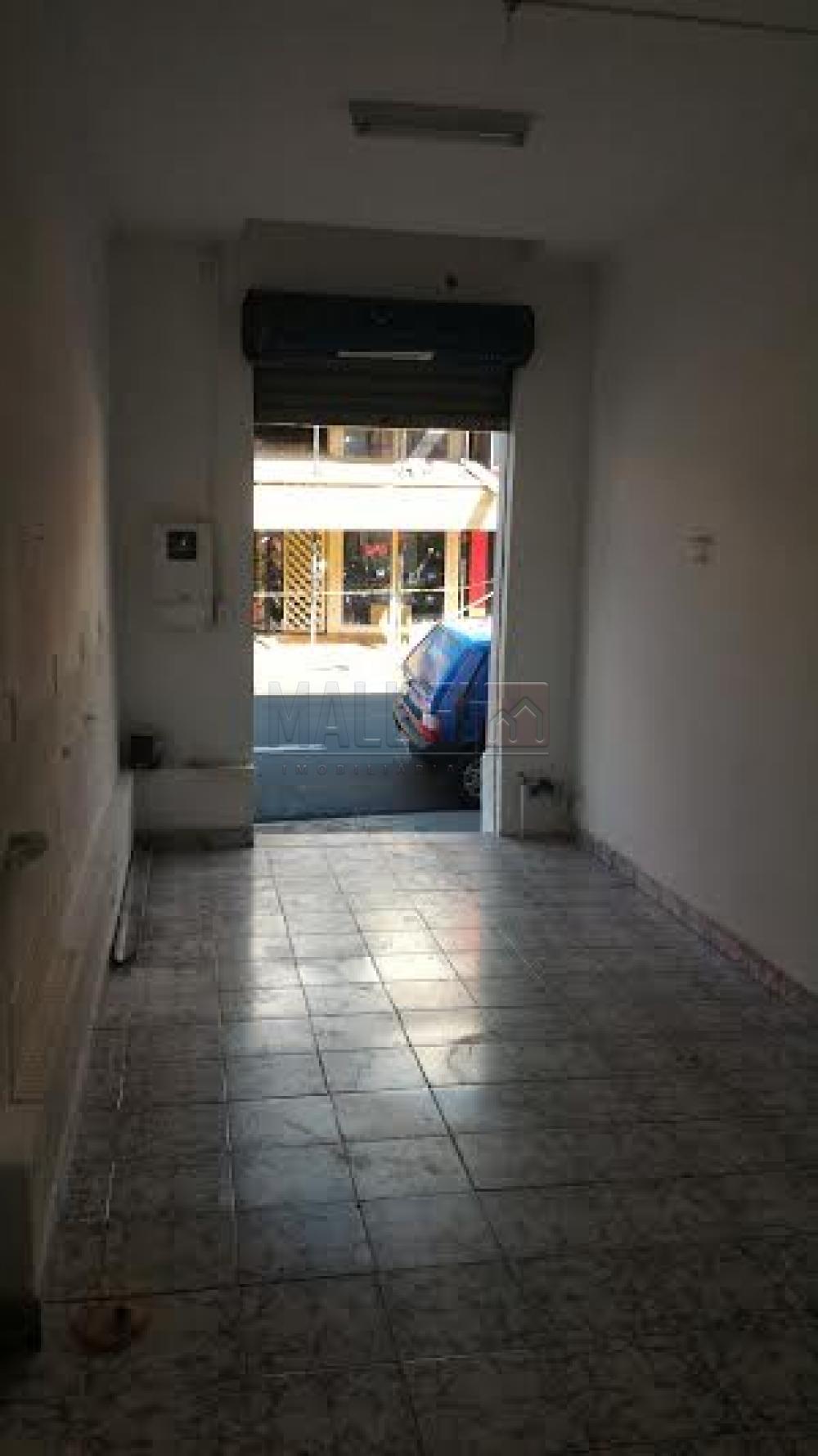 Alugar Comerciais / Sala em Olímpia apenas R$ 900,00 - Foto 2