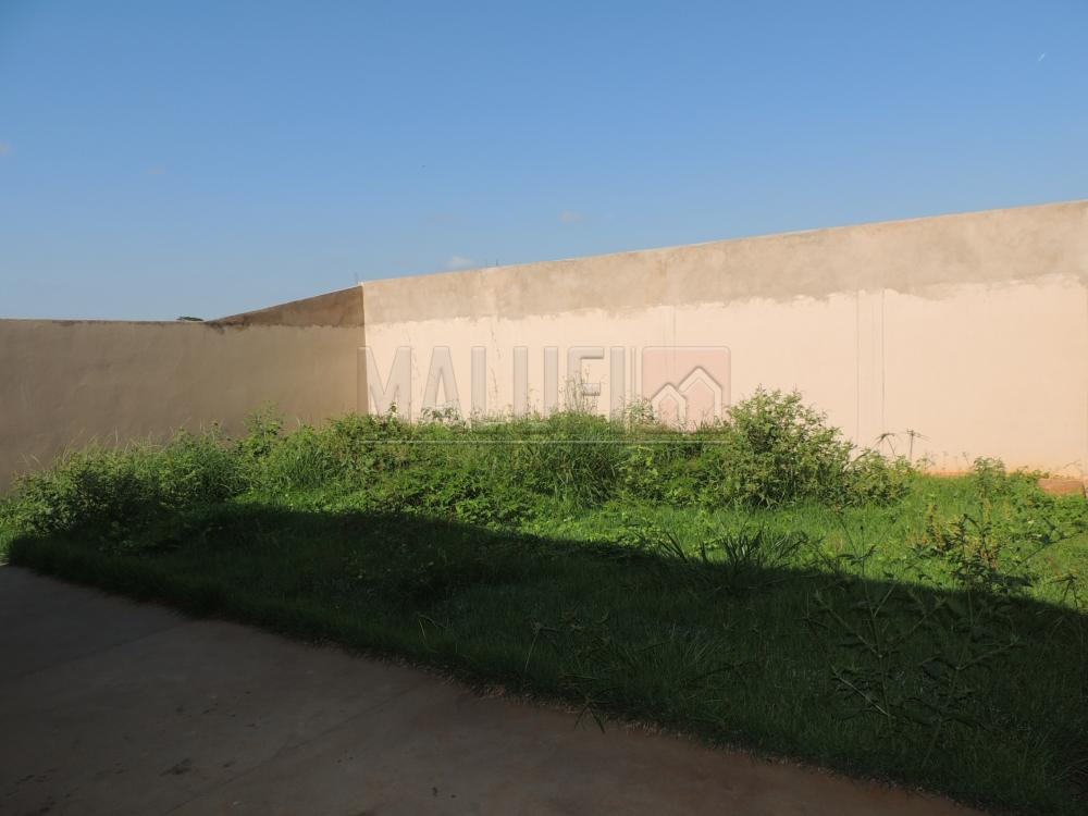 Alugar Casas / Padrão em Olímpia apenas R$ 1.100,00 - Foto 13