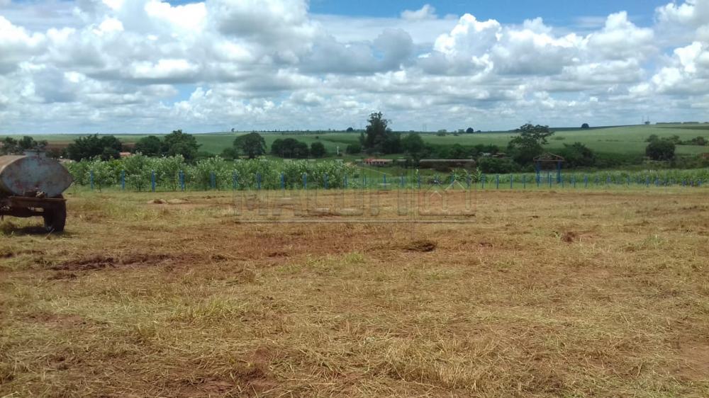Comprar Terrenos / chácara em Olímpia apenas R$ 150.000,00 - Foto 7
