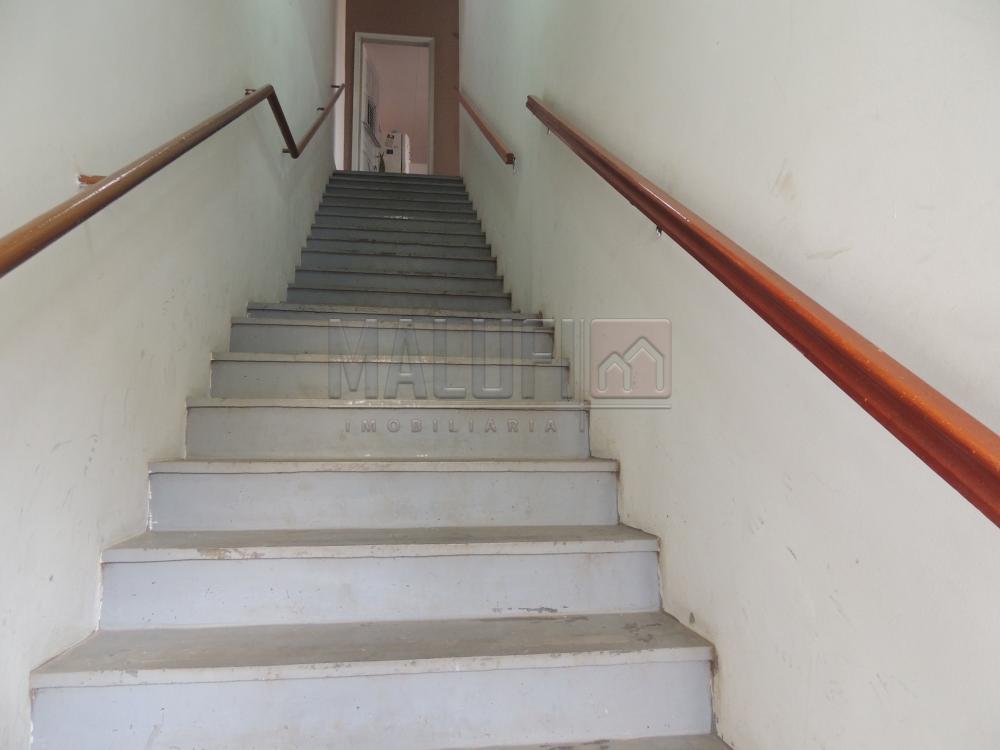 Alugar Casas / Padrão em olimpia apenas R$ 600,00 - Foto 1
