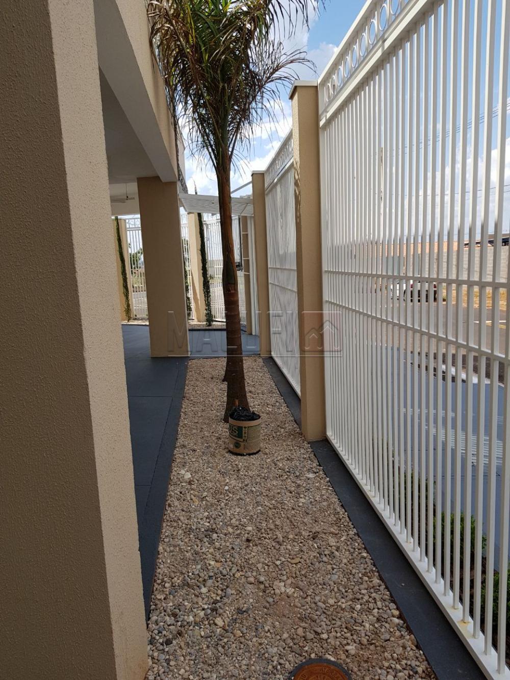 Alugar Apartamentos / Padrão em Olímpia apenas R$ 1.250,00 - Foto 43